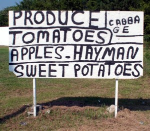 Hayman Swet Potatoes for sale. Nassawadox, VIrginia (2012).