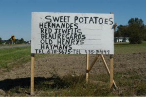 William Baines's Sweet Potatoes For Sale near Eastville, Virginia (2009)