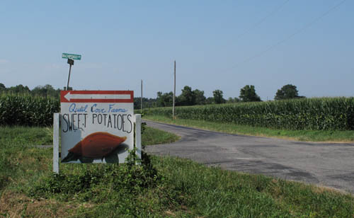Quail Cove Sweet Potato Farm near Machipongo, Virginia (2012)