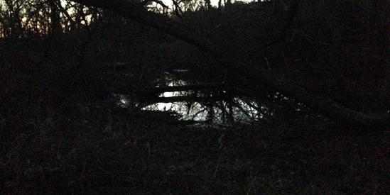 s Westerhouse bog